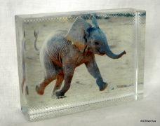 Elefántos kristálykép